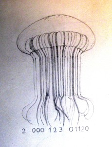 codice medusa